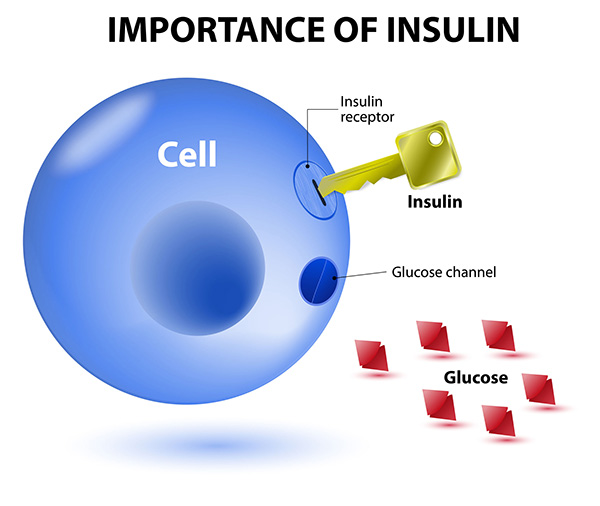 Insulin Hormone Diagram